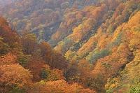岩手県 北上市 夏油温泉付近の紅葉