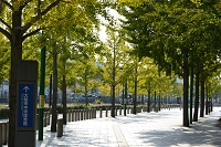 大阪 スポ-ツパークセンタ-の並木道