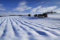 北海道 美瑛町 畑の陰影のある雪原