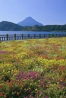鹿児島県 ポーチュラカ咲く池田湖湖畔から開聞岳