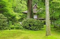 京都府 青モミジの三千院 宸殿より有清園(庭園)と往生極楽院