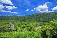 沖縄県 仲間川とマングローブ林 西表島