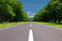 北海道 新緑の並木道 静内二十間道路