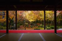 京都府 圓光寺の紅葉