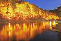 愛知県 香嵐渓の紅葉のライトアップ