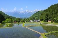 長野県 青鬼 残雪の北アルプスと田園
