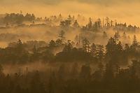 北海道 小清水峠から見る朝霧の森