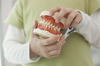 歯の模型を持つ子供
