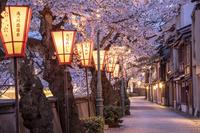 主計町暮色と桜並木