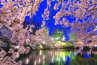 新潟県 桜のライトアップの高田城址公園
