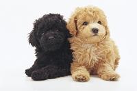 寄り添う子犬二匹