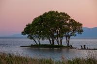 滋賀県 琵琶湖の樹木
