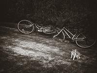 壊れた自転車と猫