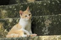 三重県 伊勢の猫
