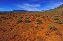 南アフリカ ナマクワランド