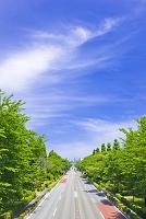 東京都 国立大学通
