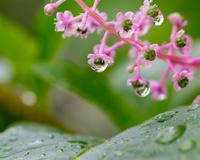 植物と水滴