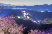 吉野山夜景と桜