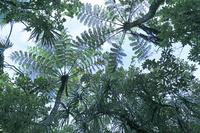 東京都 父島のマルハチの森