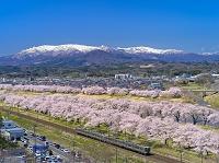 宮城県 白石川堤一目千本桜と蔵王連峰 眺望