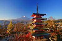 山梨県 富士吉田市 新倉山浅間神社の五重塔と朝の富士山