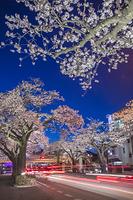 茨城県 平和通り ライトアップ