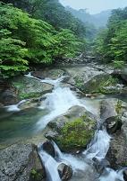 鹿児島県 屋久町 白谷雲水峡