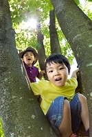 公園の木に登る日本人の男の子