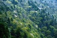 滋賀県  森林