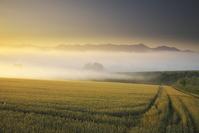 北海道 十勝岳連峰の朝と麦畑と朝霧