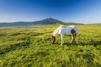 熊本県 阿蘇草千里と馬