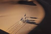 ナミビア オリックスの群れ