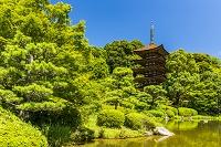山口県 瑠璃光寺 境内の香山公園と五重塔