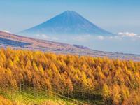 長野県 富士山とカラマツ