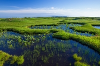 山形県 月山弥陀ヶ原湿原