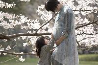 桜の木の下で母のお腹を触る娘