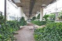 東京都 板橋区 雨水利用緑化地帯