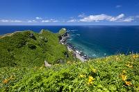 北海道 積丹町 エゾカンゾウ咲く積丹半島 神威岬