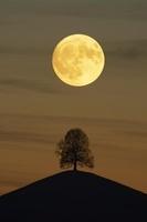 スイス 月