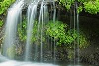 山梨県 吐龍の滝