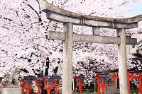 京都府 六孫王神社