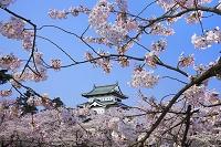 青森県 弘前城