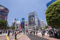東京都 渋谷区 渋谷駅前スクランブル交差点