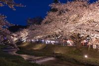 福島県 猪苗代町 観音寺川の夜桜