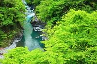 埼玉県 秩父市 新緑と渓流