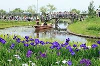 千葉県 ハナショウブ 佐原水生植物園 花嫁舟