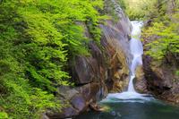 山梨県 新緑の仙娥滝