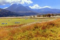 大分県 長者原の草紅葉と三俣山