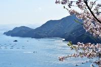桜咲く頃 錦から 紀伊長島遠望