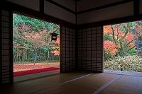 京都府 高桐院 秋の庭園